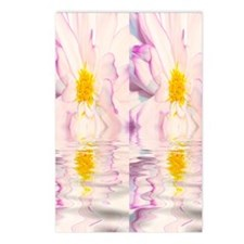 Reflections Of A White Pu Postcards (Package of 8)