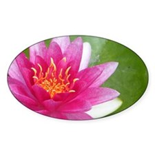 Waterlily - Coin Purse Decal