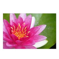 Waterlily - Coin Purse Postcards (Package of 8)