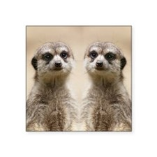 "Meerkat Square Sticker 3"" x 3"""