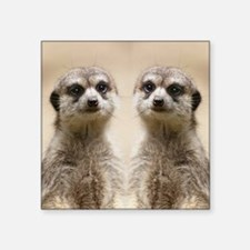 "Meerkat Square Sticker 3"" x 3"""