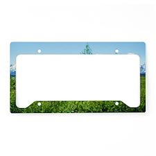 Spring Tetons License Plate Holder