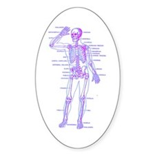 Red Blue Skeleton Body Diagram Decal