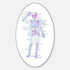 Red Blue Skeleton Body Diagram Sticker (Oval)