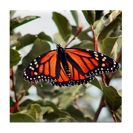 """Monarch Butterfly"" Tile Coaster"