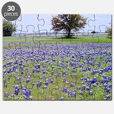 Bluebonnets Puzzle