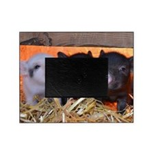 THREE LITTLE PIGS Picture Frame