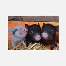 Three Little Piggies Rectangle Magnet