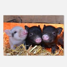 Three Little Piggies Postcards (Package of 8)