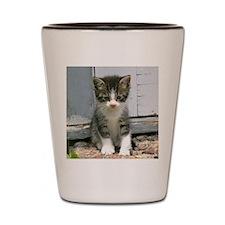 Gershwin the cat Shot Glass