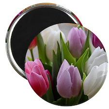 Dutch Tulips Magnet