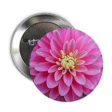 """Pink Dahlia 2.25"""" Button"""