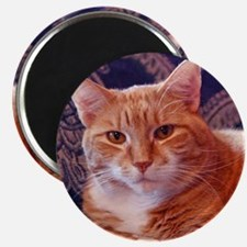 Juba the Cat Magnet