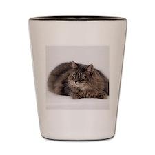 Maine Coon Cat Shot Glass