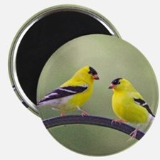 Gold Finches Magnet