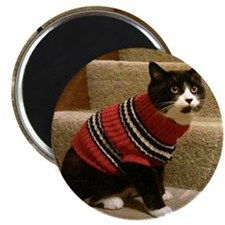 Schubert the cat in a sweater Magnet