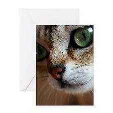 Singapura Cat Greeting Card