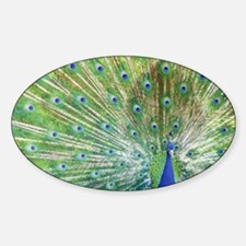 Peacock Sticker (Oval)