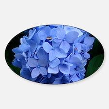 Blue Violet Hydrangea Sticker (Oval)