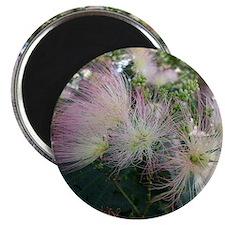 Pink Silk Mimosa Magnet