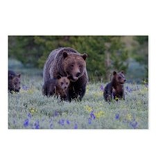 Grizzly Bear# 399  Triple Postcards (Package of 8)