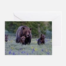 Grizzly Bear# 399  Triplets, June 20 Greeting Card