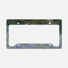 Grizzly Bear# 399  Triplets,  License Plate Holder