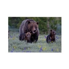 Grizzly Bear# 399  Triplets, June Rectangle Magnet