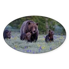 Grizzly Bear# 399  Triplets, June 2 Decal