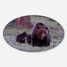 Grizzly Bear 399  her Triplet Cubs Decal