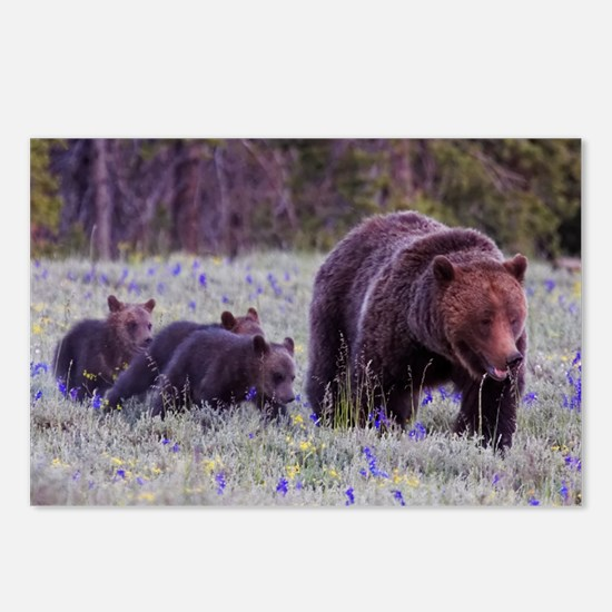 Grizzly Bear 399 Postcards (Package of 8)