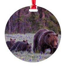 Grizzly Bear 399 Round Ornament