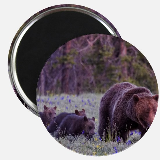 Grizzly Bear 399 Magnet