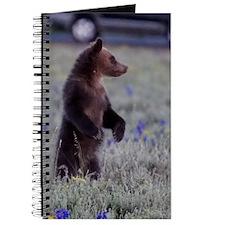 Grizzly Bear Cub, Grand Teton National Par Journal