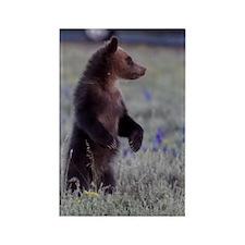 Grizzly Bear Cub, Grand Teton Nat Rectangle Magnet