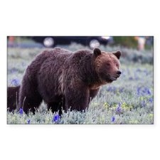 Grizzly Bear 399, Grand Teton  Decal