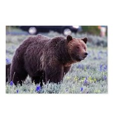 Grizzly Bear 399, Grand T Postcards (Package of 8)