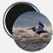 pelican 8x8 Magnet