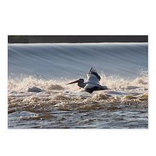 pelican 10x14 Postcards (Package of 8)