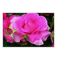 Radient Pink Rose Art Postcards (Package of 8)
