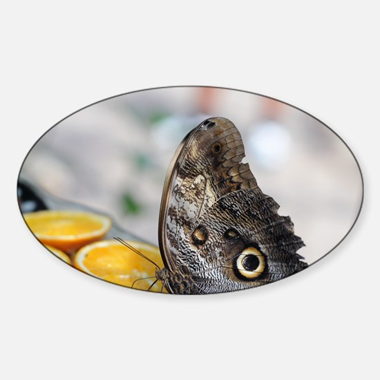Owl Butterfly and Orange Slices Sticker (Oval)
