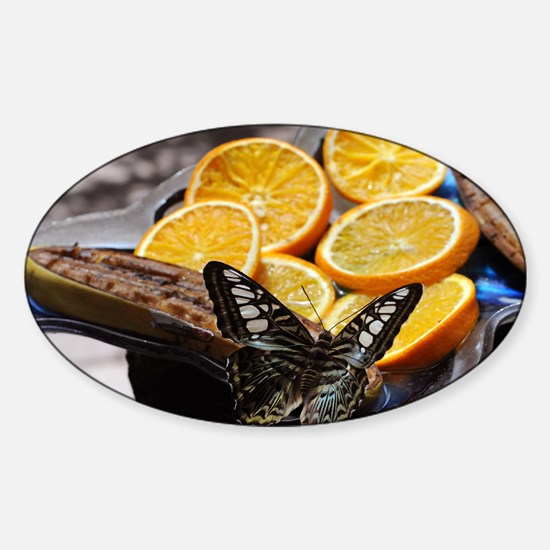 Butterfly and Orange Slices Sticker (Oval)