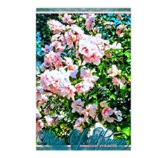 Rose of Sharon Hibiscus Postcards (Package of 8)
