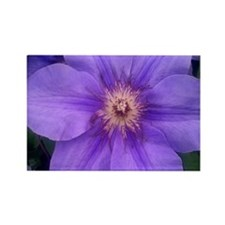 Purple Clematis Rectangle Magnet