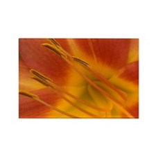 Orange Lily Rectangle Magnet