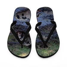 Muddy Piggies Flip Flops