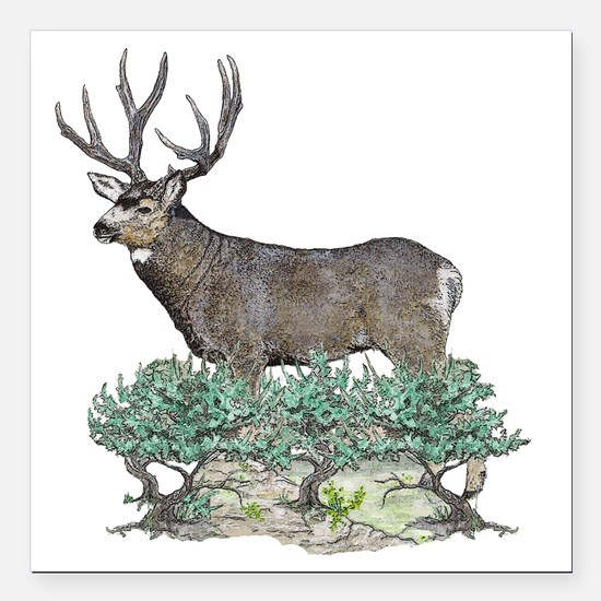 "Buck watercolor Square Car Magnet 3"" x 3"""