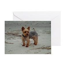 Yorkshire Terrier Hilton Head Island Greeting Card