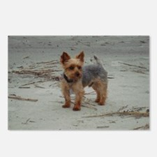Yorkshire Terrier Hilton  Postcards (Package of 8)