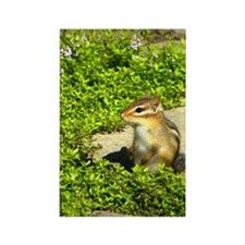 chipmunk iphone3G Rectangle Magnet